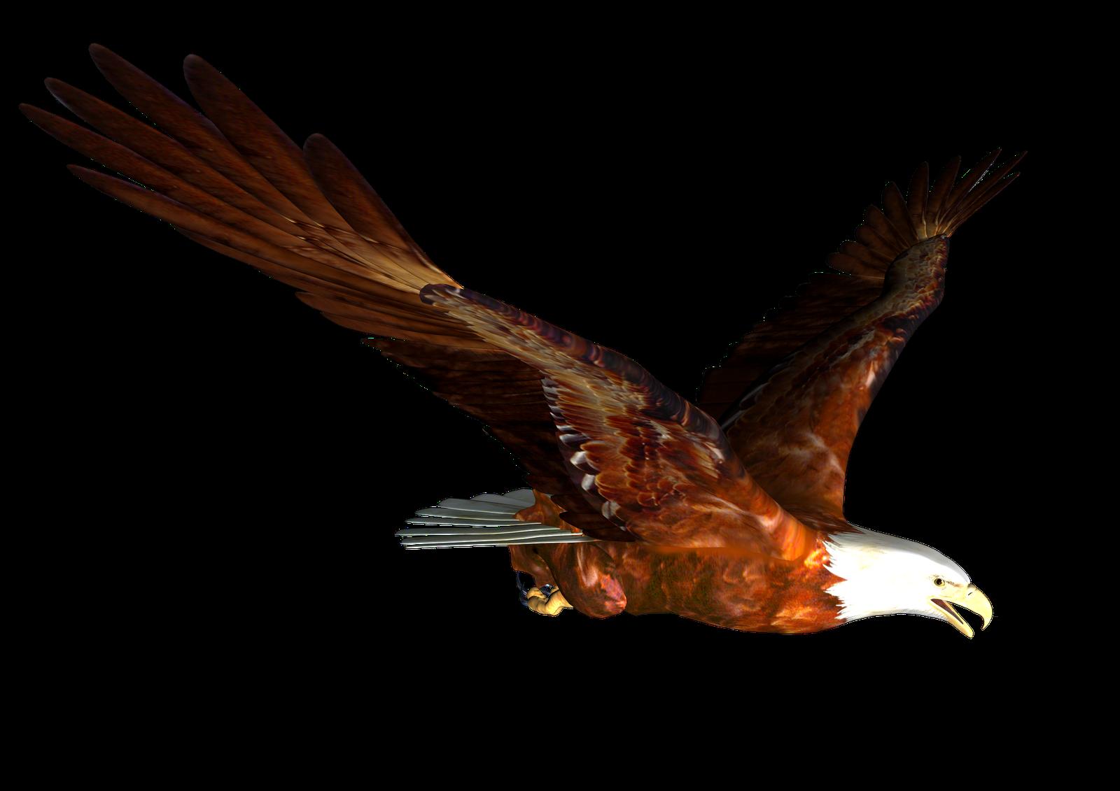 1600x1131 Bald Eagle Free Eagle Clip Art Pictures 10