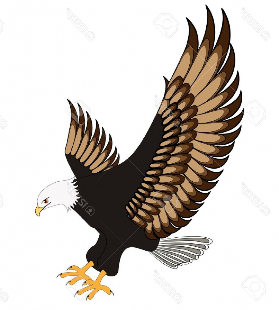 921x1024 Drawing Of An Eagle Flying Eagle Drawings Clip Art