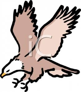 262x300 A Flying Bald Eagle Clipart Image