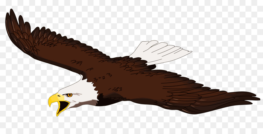 900x460 Bald Eagle White Tailed Eagle Free Content Clip Art