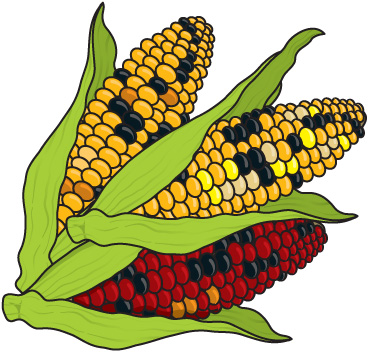 369x352 Corn Plant Growing Clipart Clipart Kid