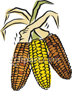 236x300 Indian Corn Free Clipart