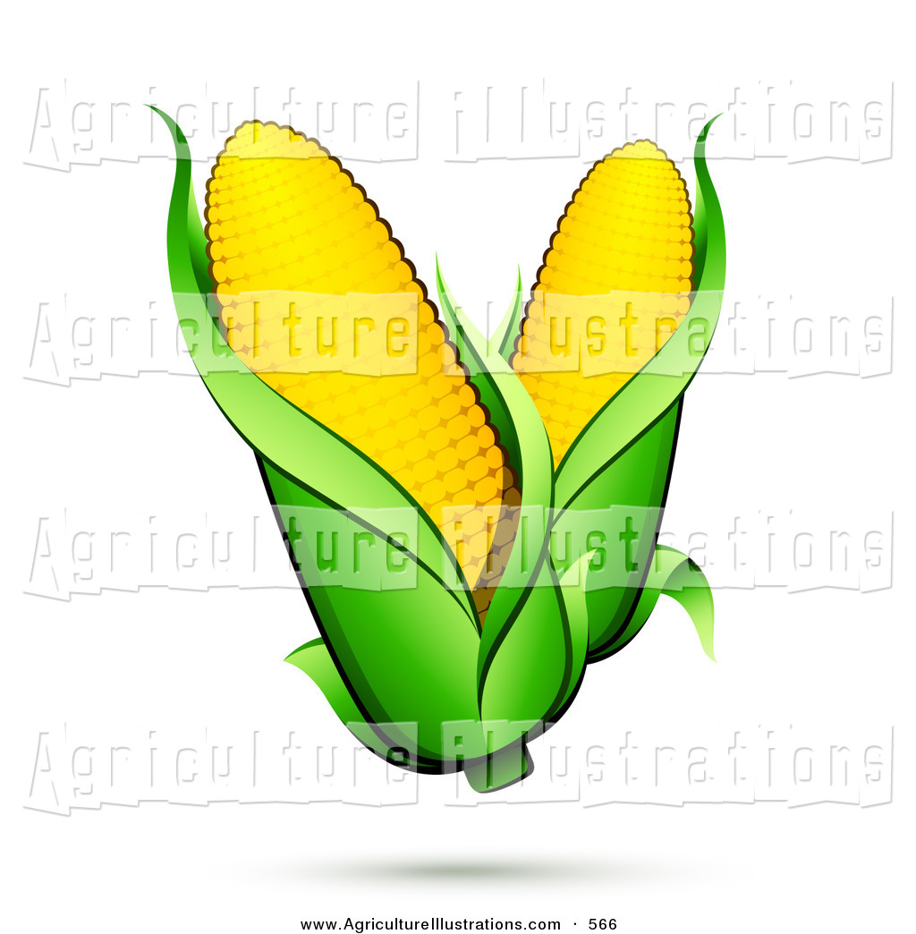 1024x1044 Agriculture Clipart Of A Couple Ears Of Corn With Green Husks