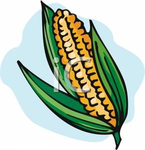 290x300 An Ear Of Corn Clipart Image