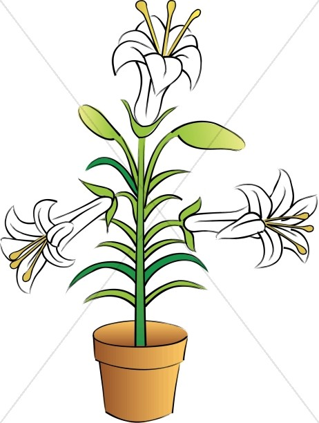 462x612 Potted Easter Lilies Church Flower Clipart