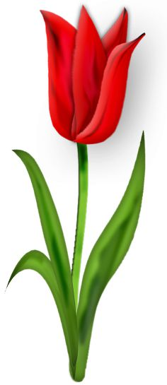 236x545 Tulip Png Image Cliparts Flowers, Paintings