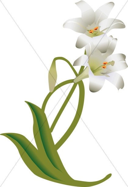 420x612 White Easter Lily Decoration Church Flower Clipart