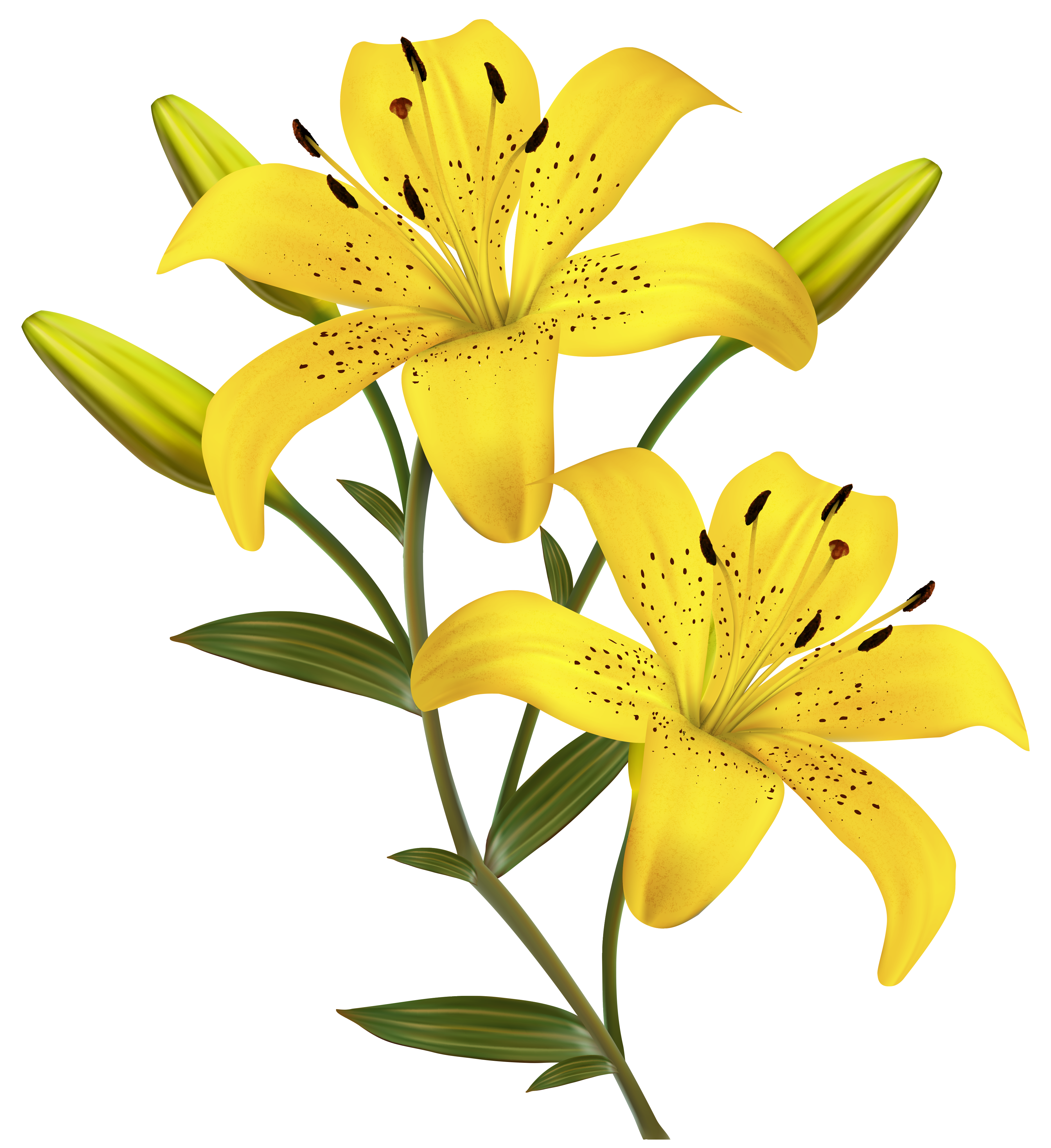 3738x4083 Yellow Lilies Png Clipart Imageu200b Gallery Yopriceville
