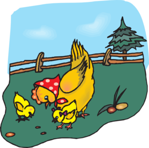 300x297 Chickens Eating Clip Art