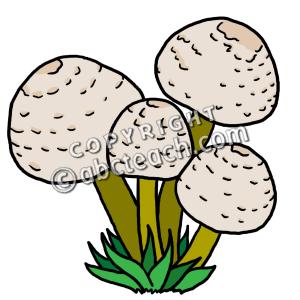300x300 Clip Art Mushrooms Color Clipart Panda