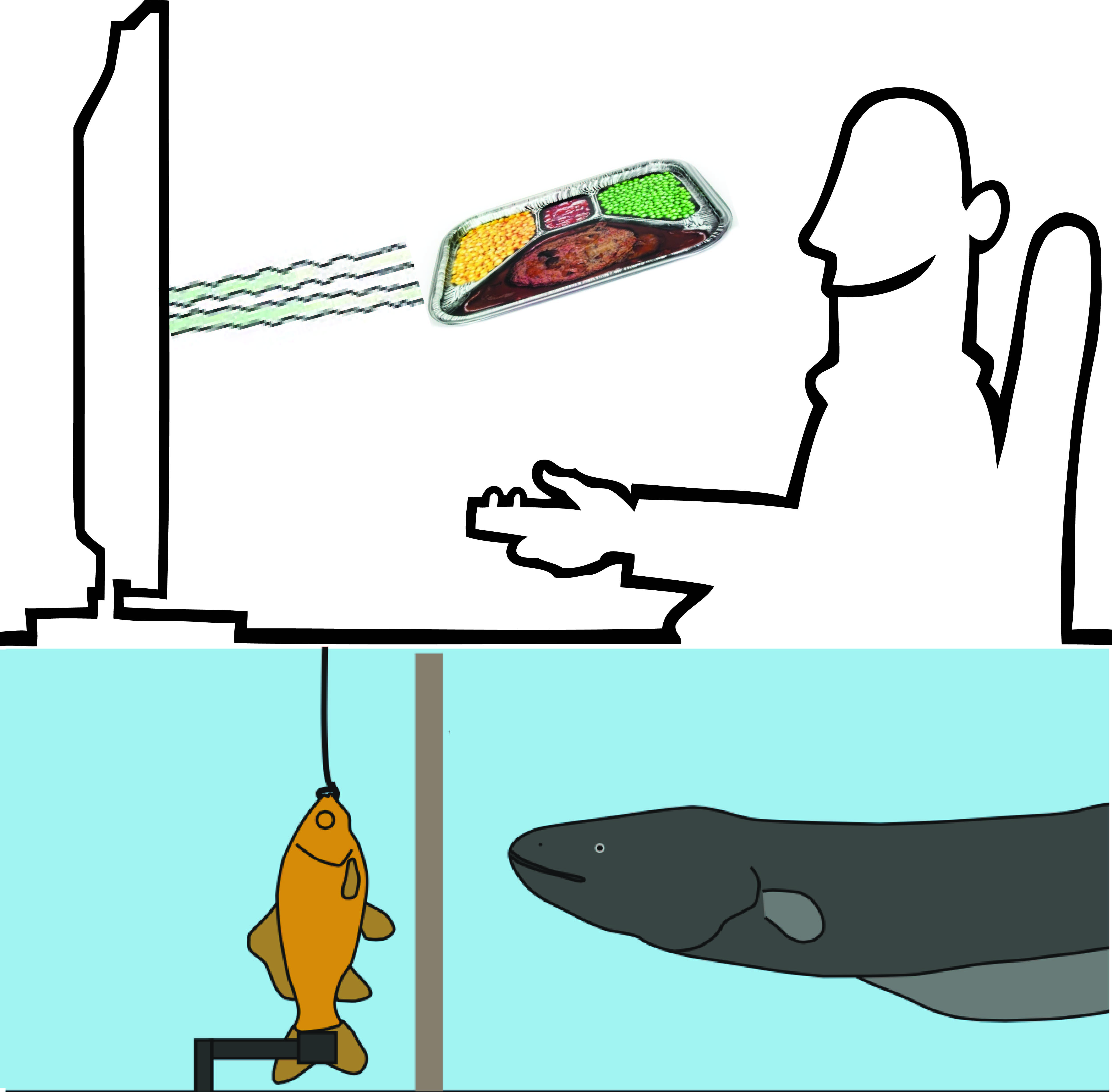 5000x4909 Shocking Behavior Electric Eels Use Remote Control To Locate