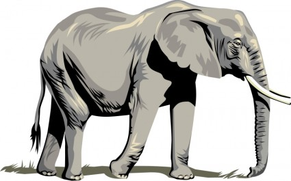 425x265 Image Of Indian Elephant Clipart