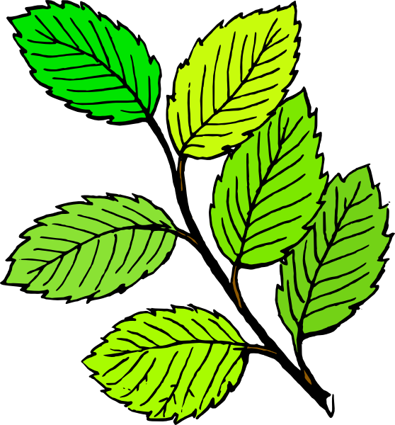 558x600 Summer Leaves Clip Art