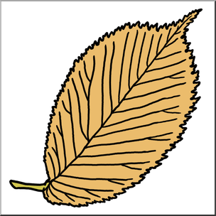 304x304 Clip Art Leaf Elm Autumn Color I Abcteach
