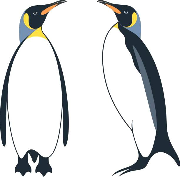 612x604 Penguin Clip Art Black And White Rosenwerk Work
