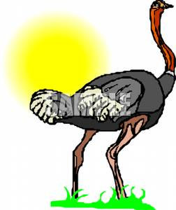 252x300 An Ostrich On A Sunny Day Clip Art Image