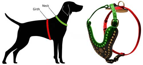 500x227 English Mastiff Leather Harness Royal Dog Harness [H11  1024