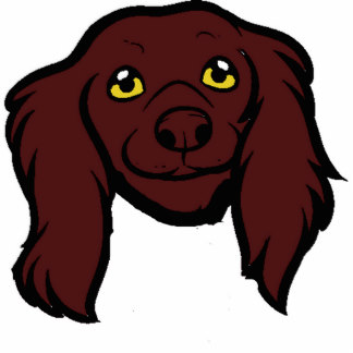 324x324 Collection Of Boykin Spaniel Clipart High Quality, Free
