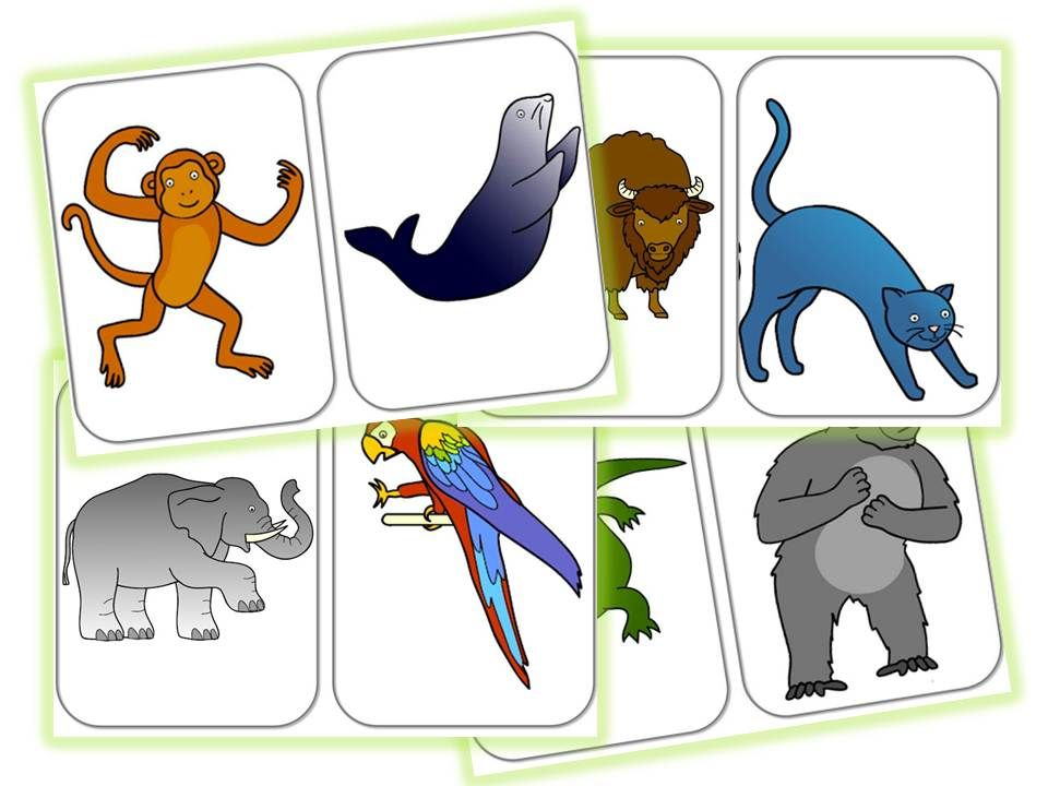 960x720 From Head To Toe Flashcards Story Telling Eric