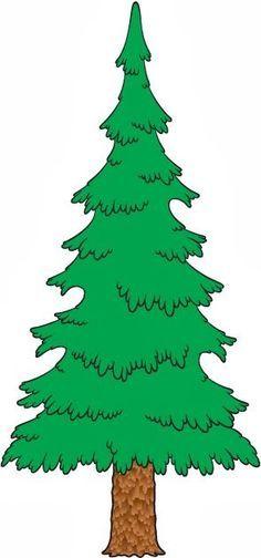 236x504 Evergreen Tree Drawings