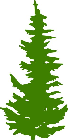 Evergreen Tree Clipart