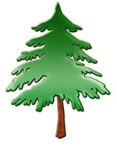 240x301 18best Of Pine Tree Clip Art