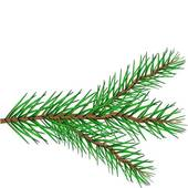 170x170 Collection Of Evergreen Branch Clipart High Quality, Free