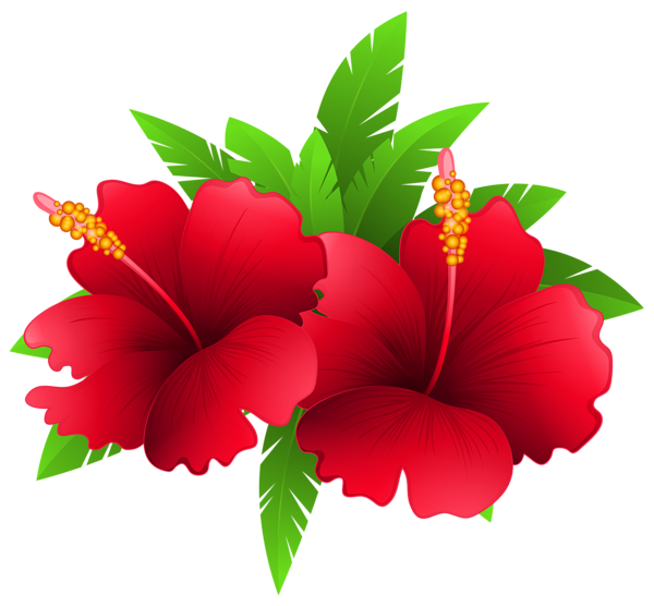 600x556 Exotic Flowers And Plant Png Clipart Image Festa Havaiana
