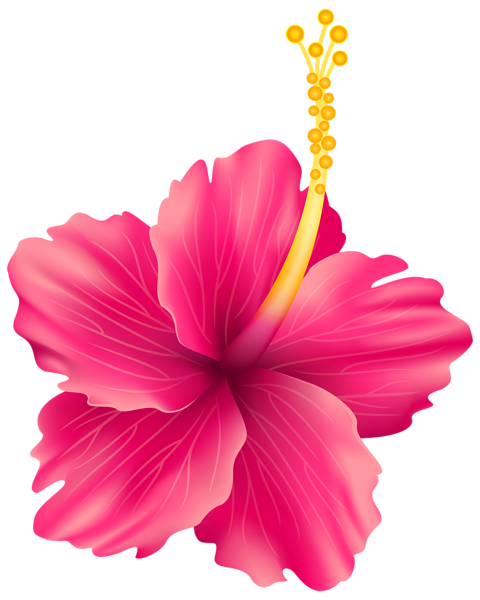 480x600 Pink Exotic Flower Png Transparent Clip Art Image Cliparts