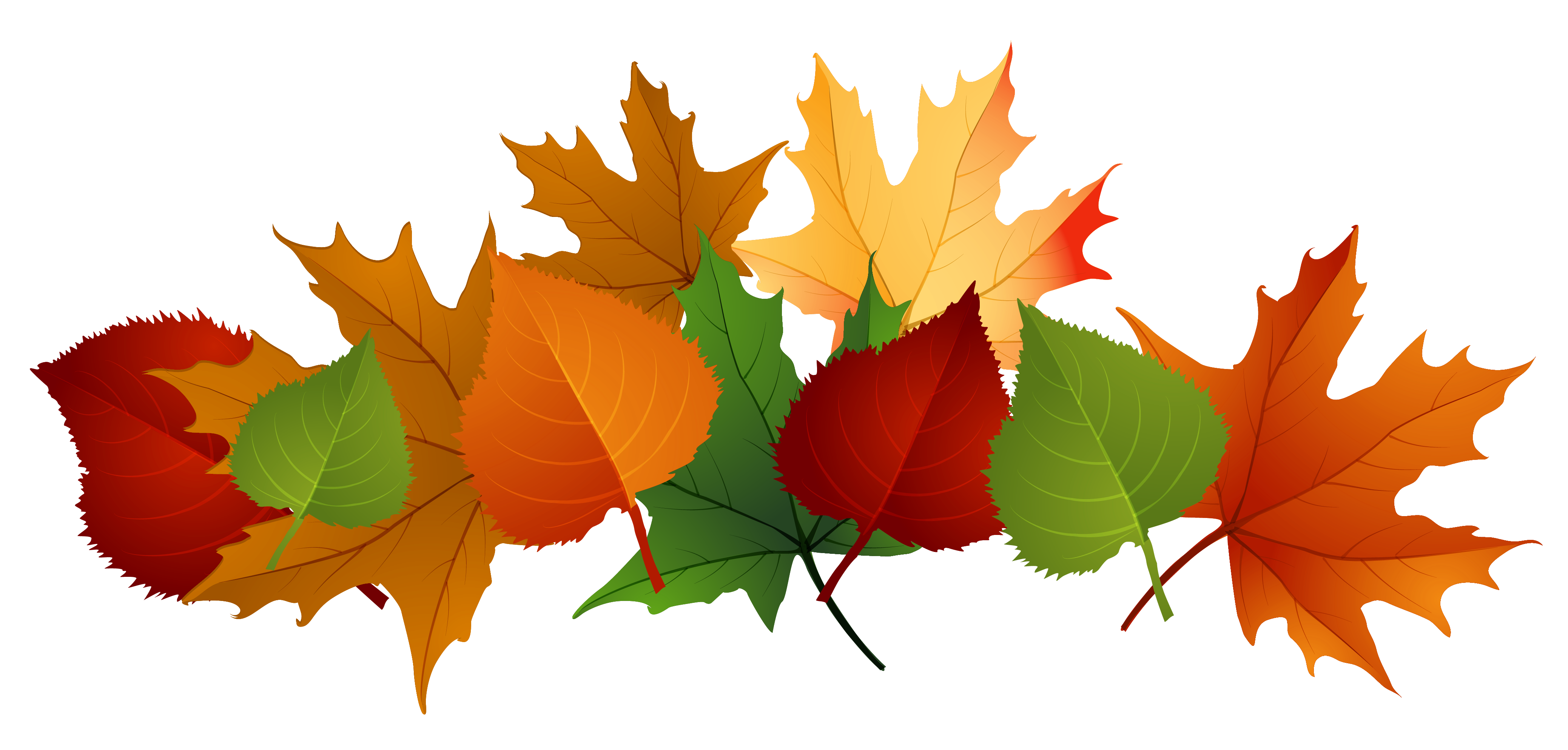 4153x1988 Collection Of Thanksgiving Leaves Clipart High Quality, Free
