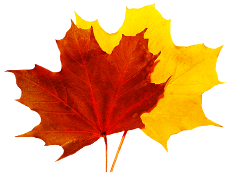 472x349 Fall Leaves Clip Art