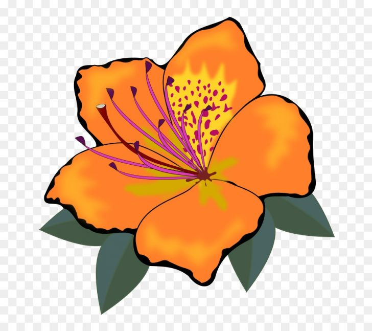 728x647 Free Clipart Orange Flowers