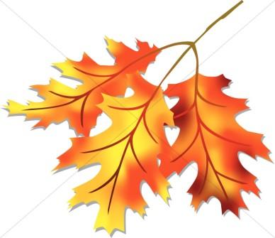 388x335 Harvest Leaf Clipart