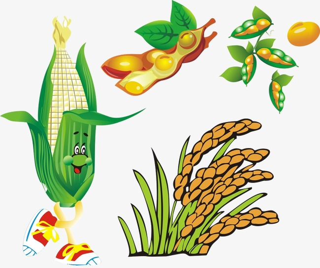 650x545 Autumn Harvest Fruit, Fall, Autumn Png Image And Clipart For Free