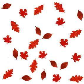 285x286 Clip Art Autumn Nature Borders Clip Art Autumn Leaves Pictures