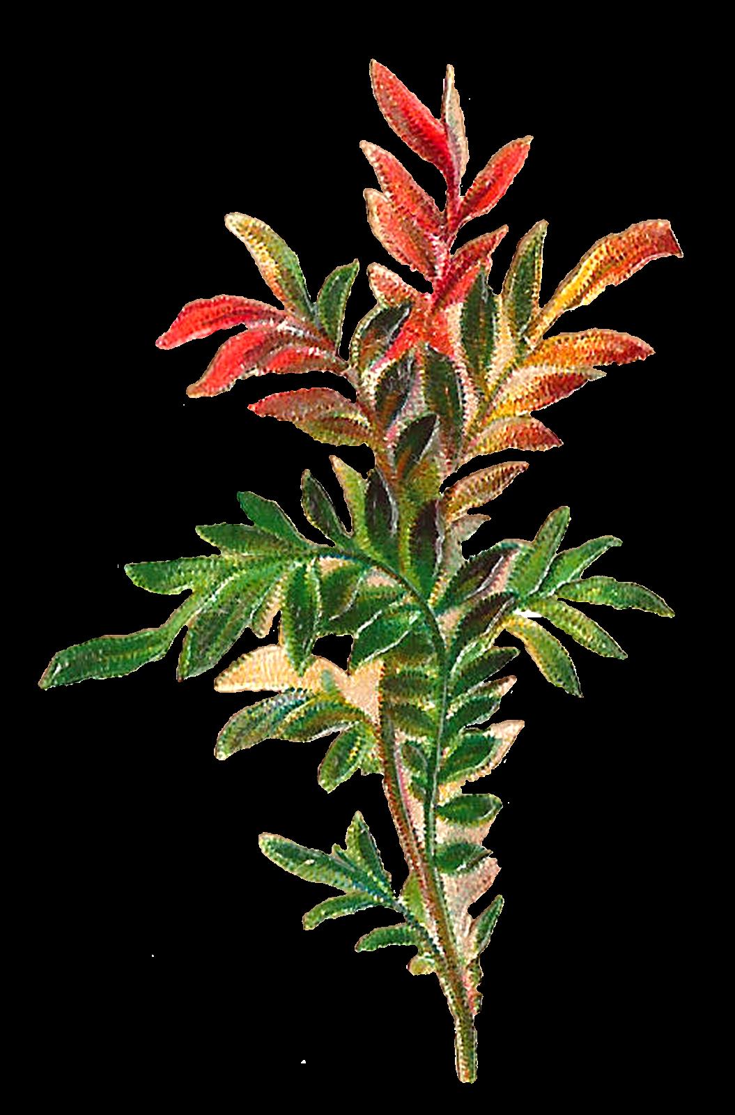 1055x1600 Antique Images Forest Plant Leaves Botanical Antique Artwork