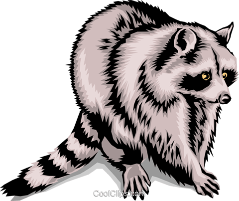 480x403 Raccoon Royalty Free Vector Clip Art Illustration Anim1394