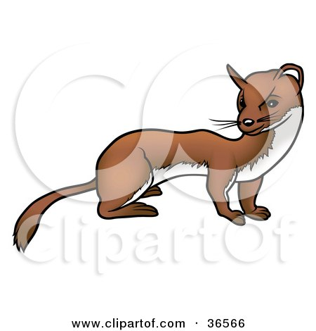 450x470 Royalty Free (Rf) Clipart Of Ferrets, Illustrations, Vector