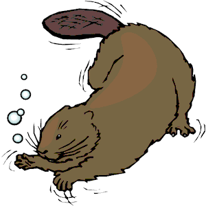 300x300 Beaver Clipart Swimming