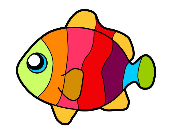 600x470 51 Best Fish Fishing Images On Pisces, Fish