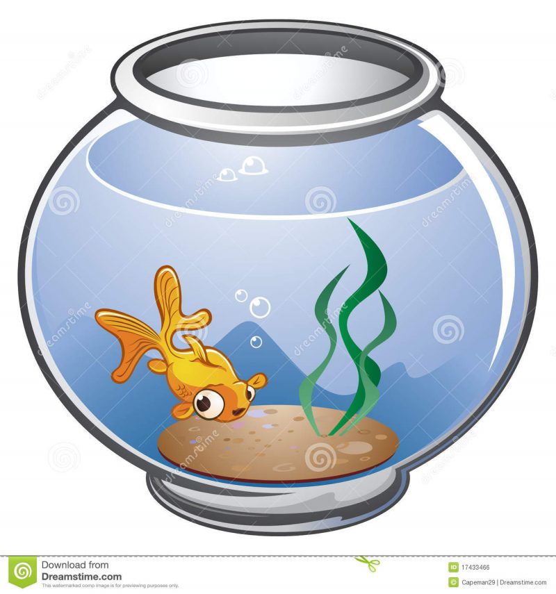 800x855 Fish Tank 31 Unforgettable Fish Tank Cartoon Pictures