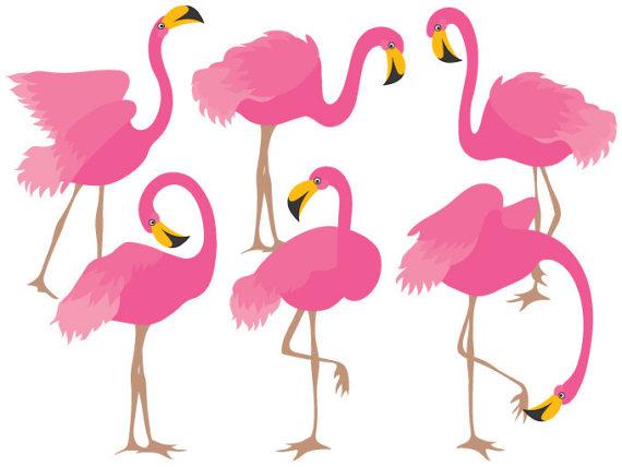 570x428 Flamingo Clipart Digital Vector Flamingo Bird Exotic