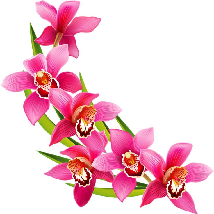 736x736 389 Best Clip Art Flowers Images On Art Flowers