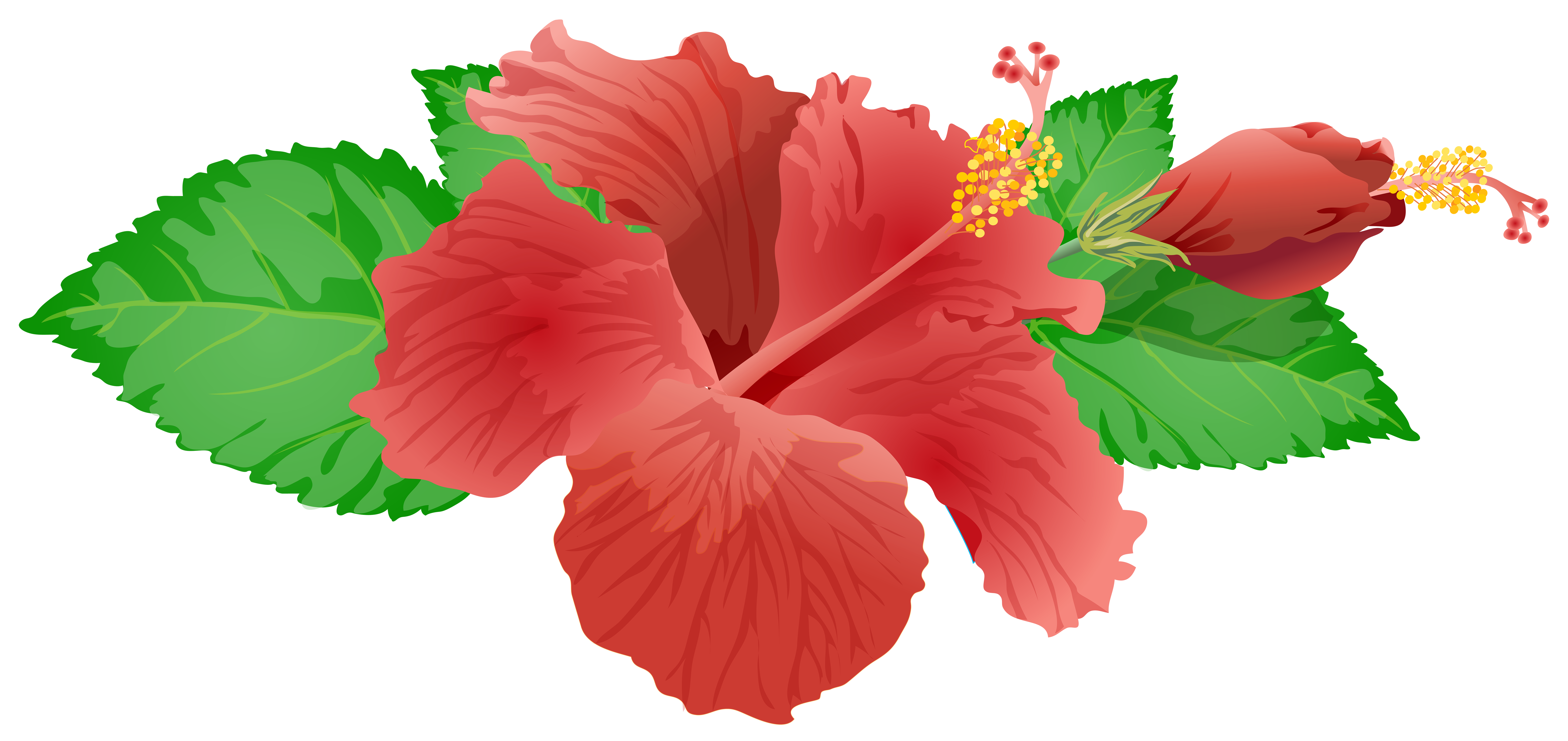 8000x3780 Red Flower Png Clip Art Image