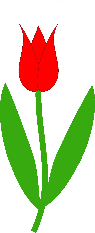 999x2456 Free Tulip Clip Art Pictures
