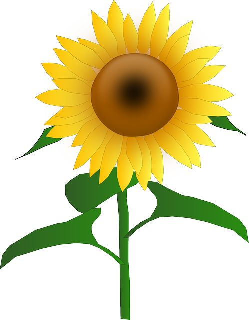 Flower Cartoon Clipart