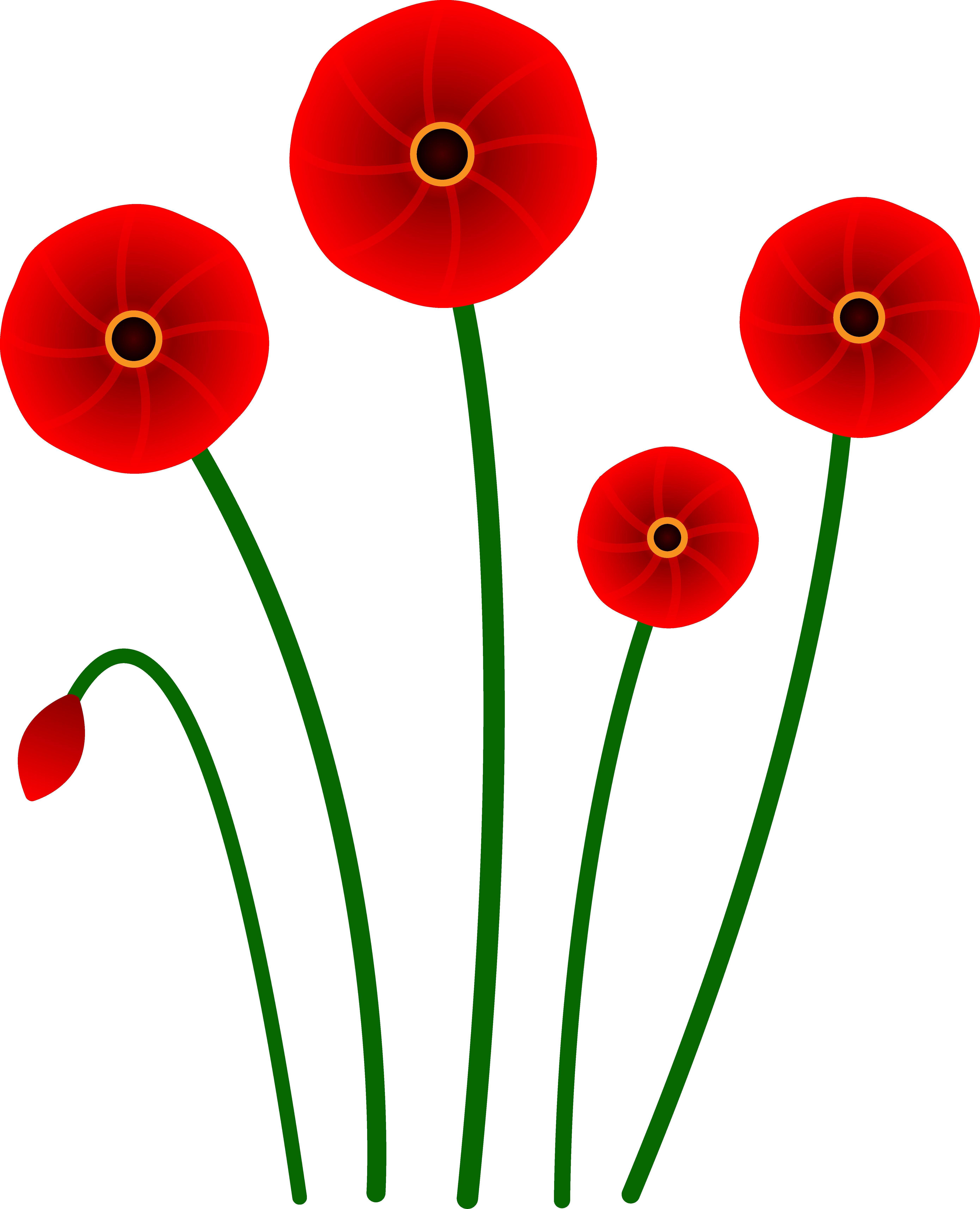 5560x6855 Red Poppy Flowers