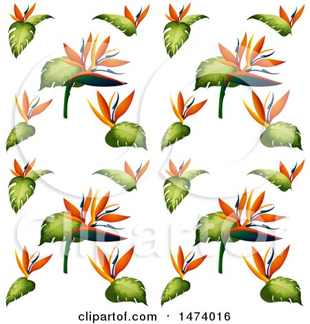 450x470 Royalty Free (Rf) Clipart Of Bird Of Paradise Flowers