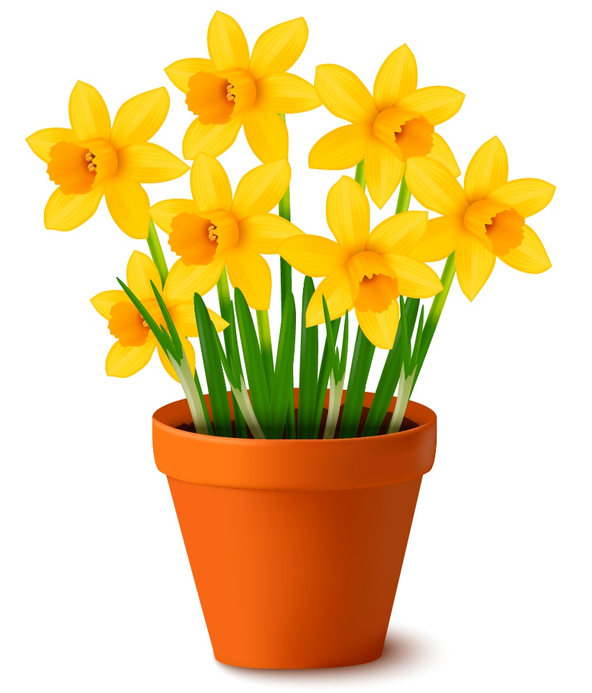 850x994 How To Create A Pot Of Daffodils With Gradient Mesh In Adobe