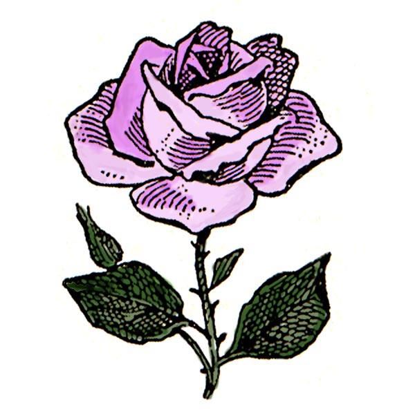 600x605 Purple Rose Clipart Flower Line